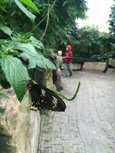 ButterflyConservatory
