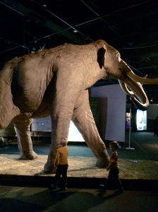 Elephant Science Centre